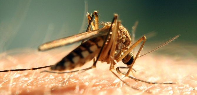 Apps tegen muggen: die werken dus niet